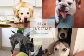 h24-insieme-al-cane-quarantena-blog-eteamdog