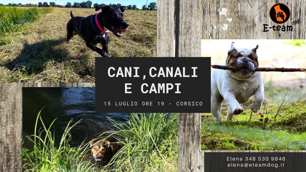Cani-canali-campi-15luglio-lezione-gruppo